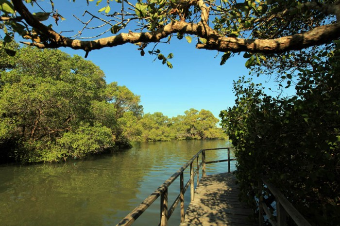 hutan mangrove bali
