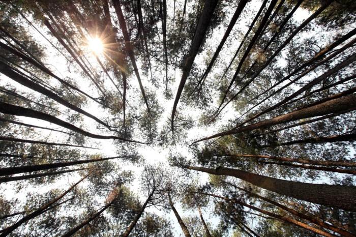 hutan pinus 01_blog
