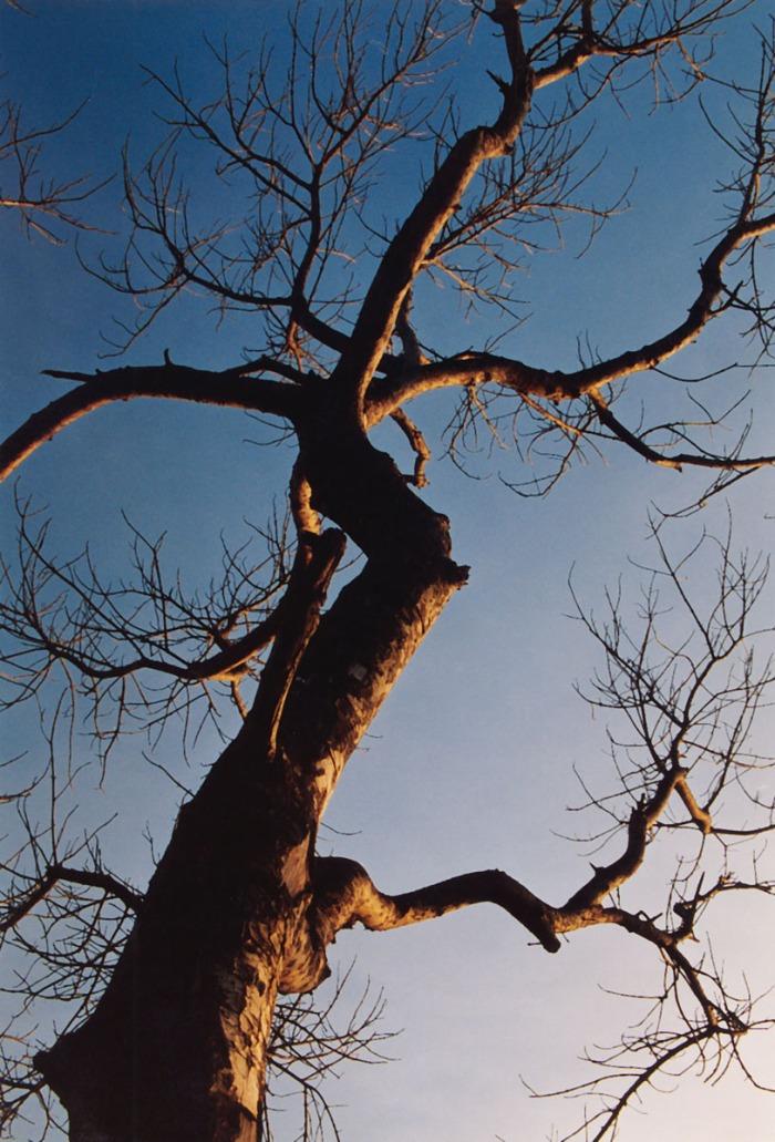 pohon di kuta