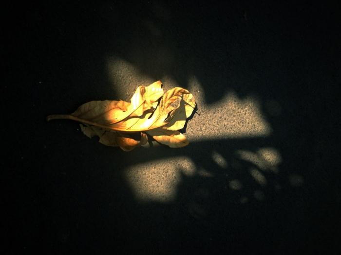 IMG_6171_blog